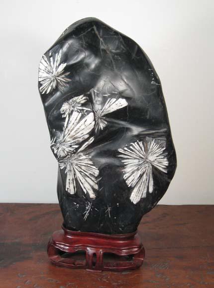 HS3 Chrysantheum Stone $300