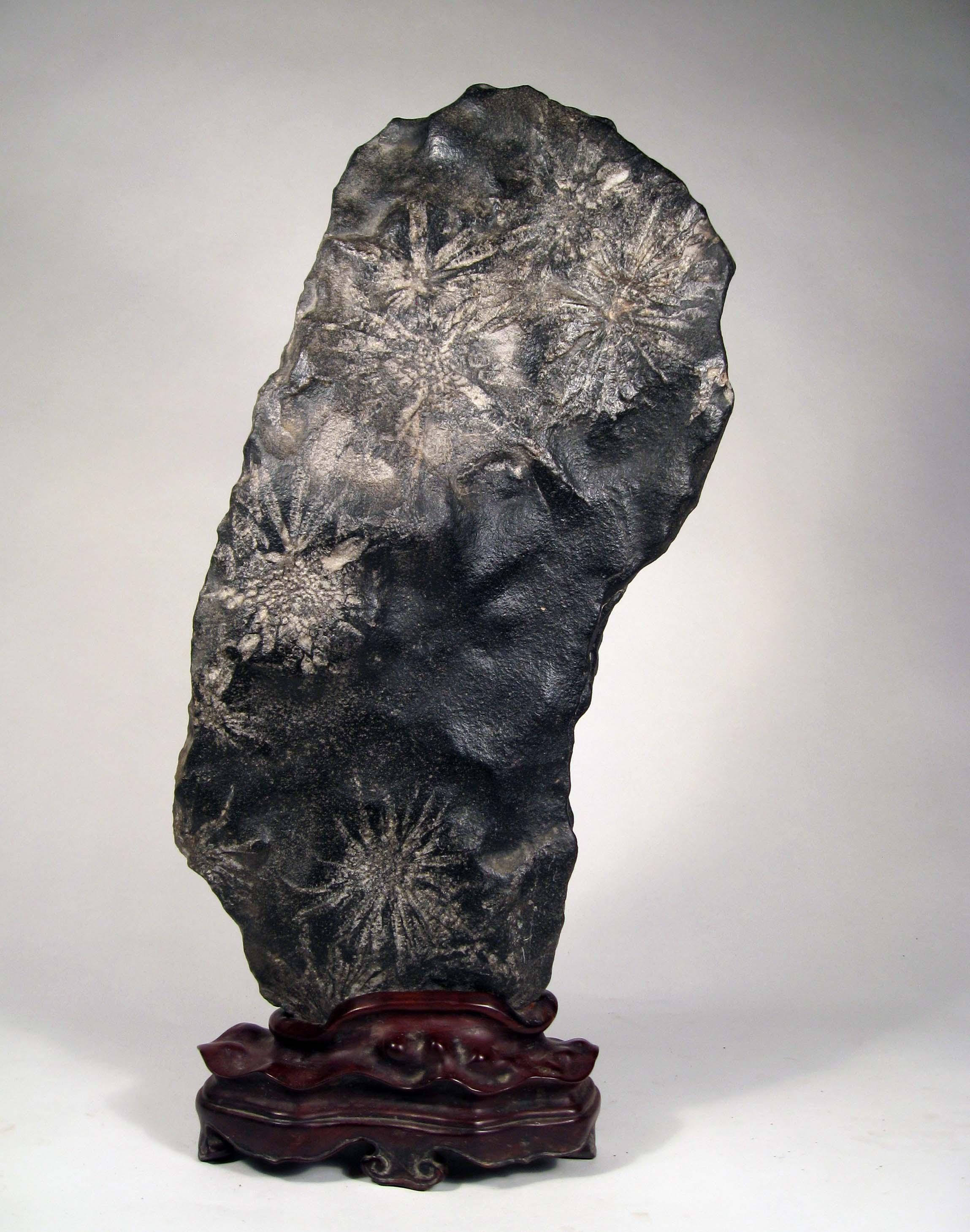 S07 Chrysanthum Stone 39x20x8 cm